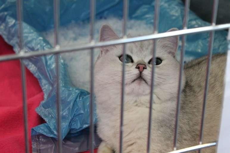 Mostra felina a villa Erba, Como