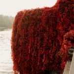 i colori autunnali sul lago di como