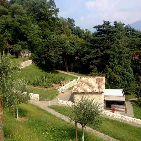 uliveto di Villa Carlotta, sul Lago di Como