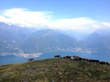 Mucche sul profilo della montagna