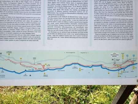mappa sentiero dell'olivo