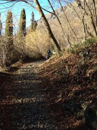 sentiero nel bosco attorno al rogolone