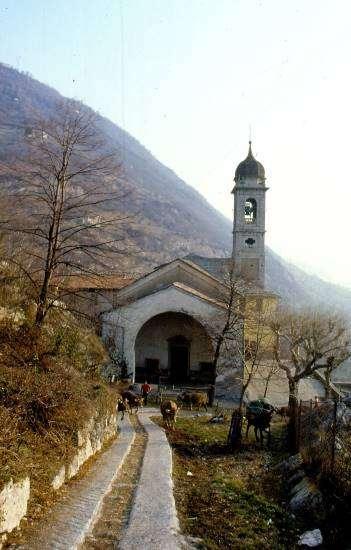 transumanza sul Lago di Como lungo il viale del Sacro Monte di Ossuccio